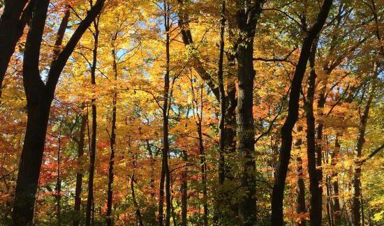 fall colors in minneapolis