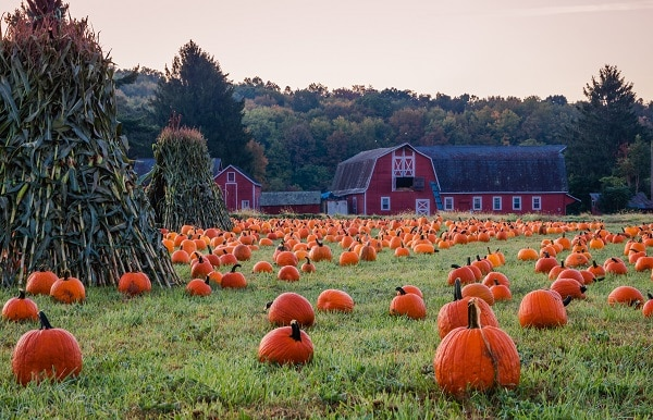 pumpkin patches in Minneapolis